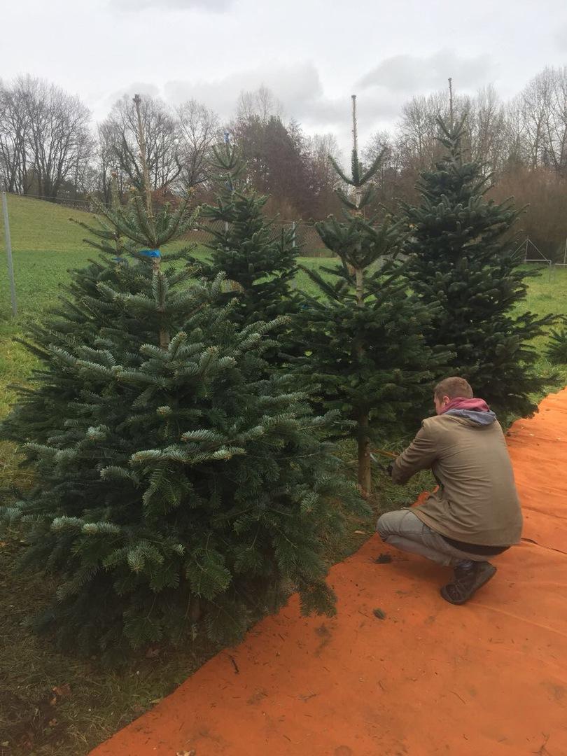 Weihnachtsbaum Selber Schneiden.Christbaum Stuber Christbaumstände